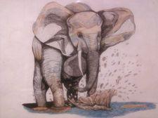 Buy bull elephant