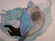 Buy shark