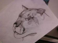 Buy cougar