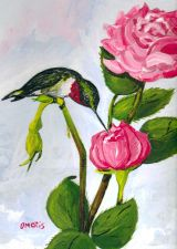 Buy Hummingbird and Roses Greeting Card