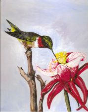 Buy Hummingbird and Trumpet Flower Greeting Card