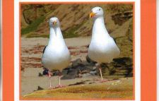 Buy White Gulls Greeting Card