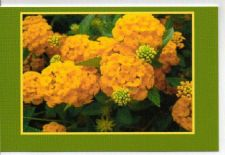 Buy Striking Orange Mums Greeting Card