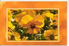 Buy Yellow Bold Pansies Greeting Card