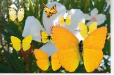 Buy Butterfly Garden Greeting Card