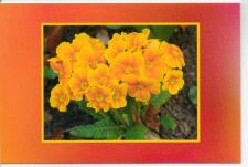 Buy Yellow Flowers On Orange Card