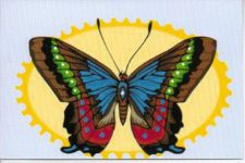 Buy Beautiful Butterfly Greeting Card