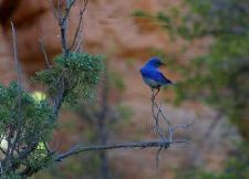 Buy Bluebird Keeping In Touch Greeting Card