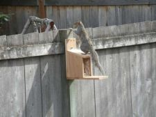 Buy Cedar Squirrel Feeder