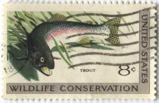 Buy 1971 8c Wildlife Conservation Series Trout Used Stamp Cancelled Nice Stamp