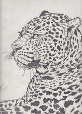 Buy leopard