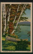 Buy Among the Birches, Northwoods Vacation View