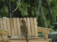 Buy Porch Swing Bird Feeder