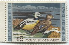 Buy 1973 $5.00 Steller's Eider Duck Stamp Unsigned Clean High Catalog Value $35
