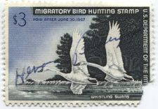 Buy 1966 $3.00 Whistling Swans Duck Stamp Signed Corner Missing High Catalog Value