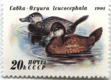 Buy 1991 Russia Duck Conservation Stamp 20k White Headed Duck