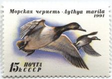Buy 1991 Russia Duck Conservation Stamp 15k Greater Scaups