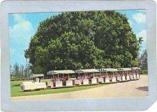 Buy FL Hialeah Amusement Park Postcard Hialeah Park Tram Train top_box1~81
