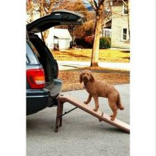 Buy Pet Gear Free-Standing Pet Ramp