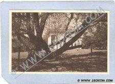 Buy CT Farmington The Aged Willow ct_box2~718
