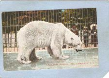 Buy CAN Vancouver Postcard Polar Bear Stanley Park can_box1~148