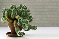 Buy 10 Green Strangs Cactus Seeds Mixed Heat Rare Succulents Stone Flower Desert Sun