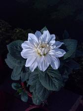 Buy floral series 1