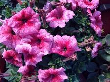 Buy floral series 2