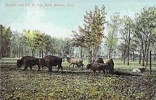 Buy Buffalo and Elk In City Park, Denver Vintage Postcard