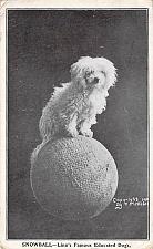 Buy Snowball-Linn's Famous Educated Dog Vintage Postcard