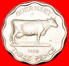 Buy ★COW: GUERNSEY ★3 PENCE 1959 THICK FLAN! LOW START! NO RESERVE!