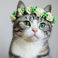 Buy Flowery Head Band for Cats, Pet Wedding Collars, Cat Collars