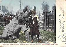 Buy Training the Baby Elephant Central Park New York Vintage Used Postcard