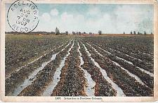 Buy Irrigation in Northern Colo Used Vintage Postcard