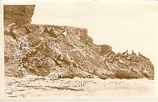 Buy Sea Lion Herd on Groh Rock, Oceanside, Oregon Real Photo Vintage Postcard