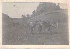 Buy Young Man With His Two Horses Real Photo RPPC Vintage Postcard