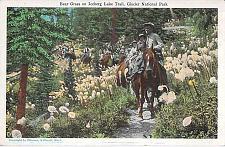 Buy Riding Horse on the Trail, Glacier National Park Montana Vintage Postcard