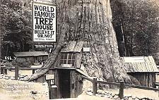 Buy Believe it or Not Tree House Lilley Redwood Park Real Photo Vintage Postcard