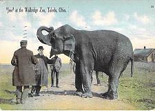 Buy Jose at the Wallbridge Zoo, Toledo Ohio Used Vintage Postcard