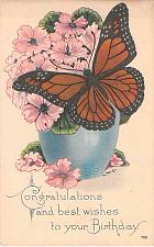 Buy Congratulations Best Wishes Birthday, Butterfly Illustrated Art Vintage Postcard
