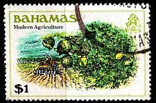Buy BAHAMAS [1980] MiNr 0466 ( O/used ) Pflanzen