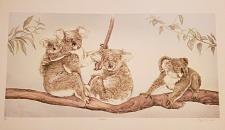 Buy Mary Ann Lis - Artist Proof Pencil Signed Lithograph - Koalas