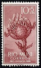 Buy Rio Muni #B1 Croton Plant; Unused No Gum (0.25) (1Stars) |RIOB01-01XVA