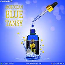 Buy Moroccan blue tansy essential oil company