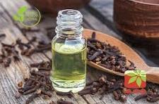 Buy Clove Essential Oil
