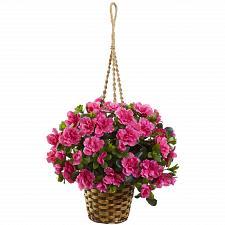 Buy Azalea Hanging Basket