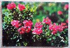 Buy Rhododendrom Ferrugineum L.. Vintage Postcard from Albania