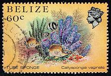 Buy Belize #709 Tube Sponge; Used (2Stars) |BEZ0709-02XVA