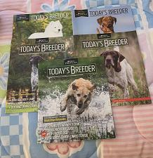 Buy Five Issues 96 97 99 101 102 Todays Breeder Magazine English Springer Spaniels