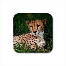 Buy Cheetah Wild Cat Set Of 4 Square Rubber Coasters